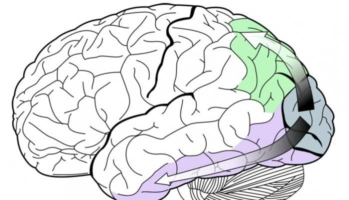 Beyin gördüyü ilə görmədiyini necə fərqləndirir?