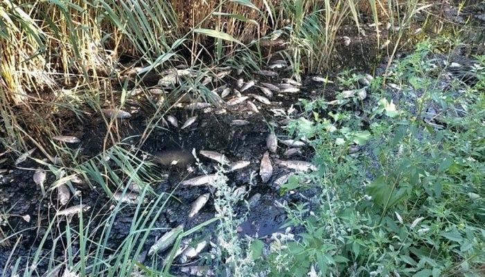 Adıyaman'da korkutan toplu balık ölümleri