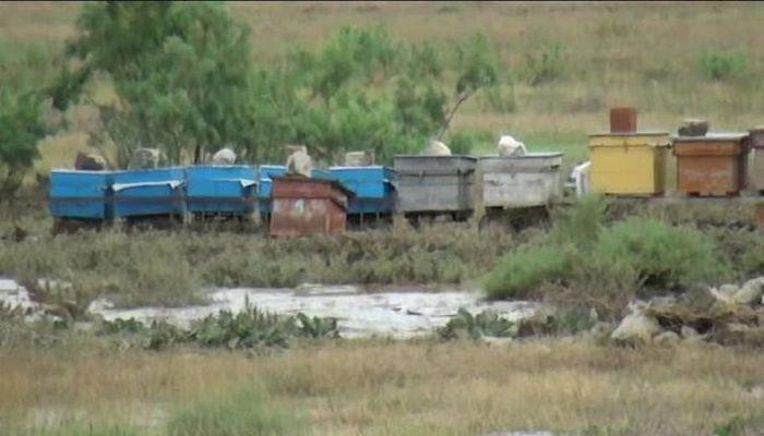 Проливные дожди и сель нанесли серьезный урон селу в Геранбое