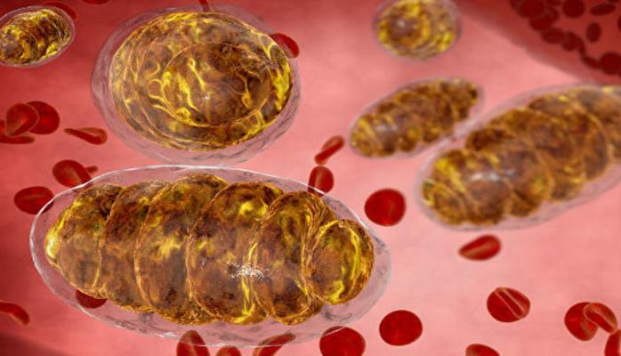 В человеческом теле нашли странные клетки
