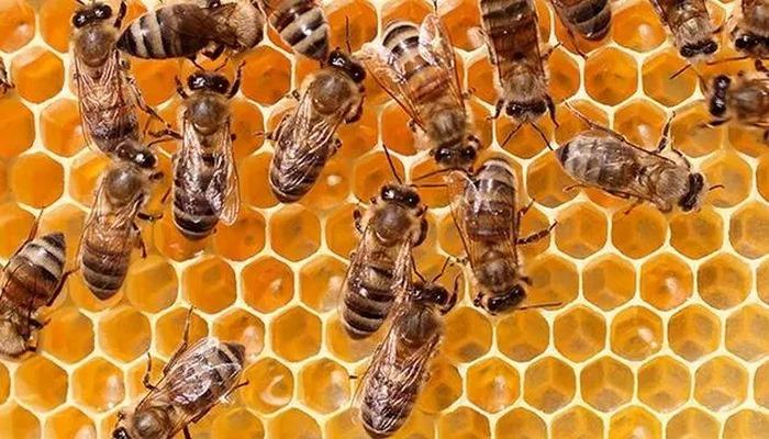 Arılar iklim değişikliği nedeniyle yok olma tehlikesiyle karşı karşıya