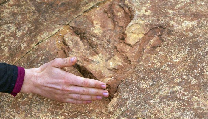 Dinozavrlardan daha qədim: 500 milyon yaşı olan canlı tapılıb