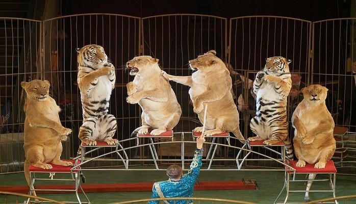 Nyu-Cersi vəhşi heyvanlar ilə sirk tamaşalarının qadağan edildiyi ilk ABŞ ştatı oldu