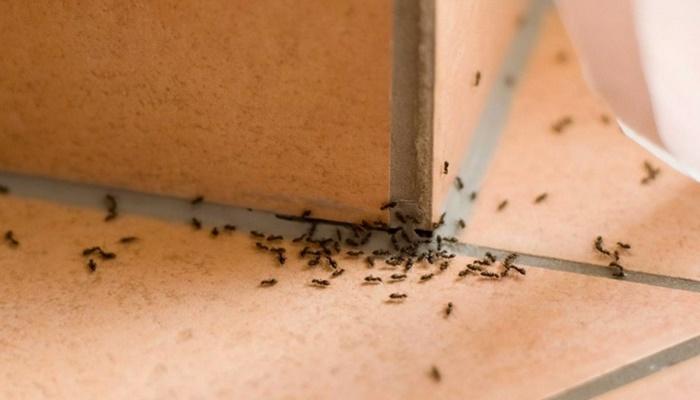 Evde karıncalardan kurtulmak için tarçın kesin çözüm!