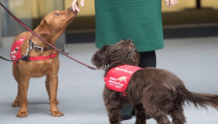 В Великобритании собак научат вынюхивать больных коронавирусом