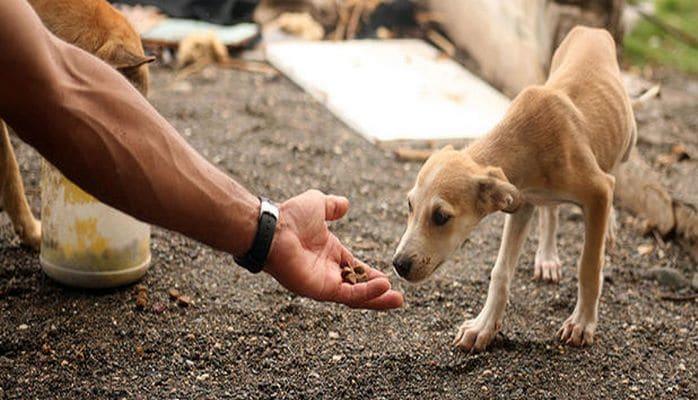 Названа опасность кормления бродячих собак