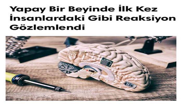 Bilim insanları, laboratuvar yapımı insan beyninde tarihte ilk defa insansı elektriksel akım gördüklerini belirttiler.