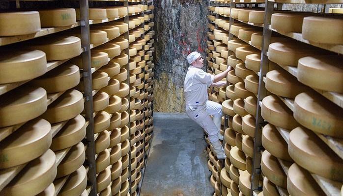 Учёные рассказали о плюсах жирного сыра