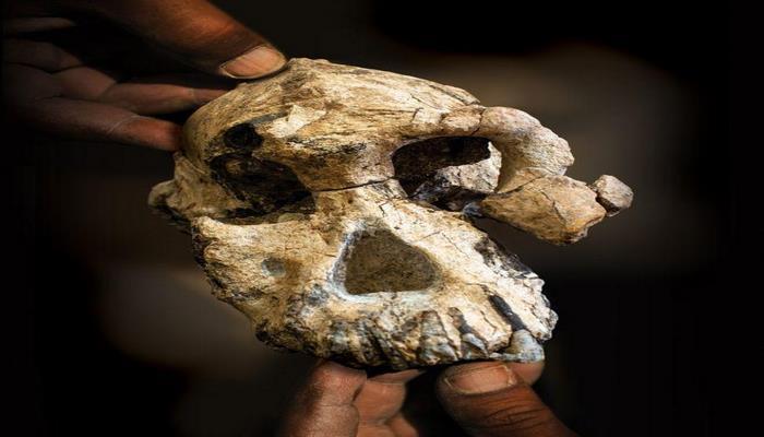 Череп из Эфиопии меняет представление о предках человека