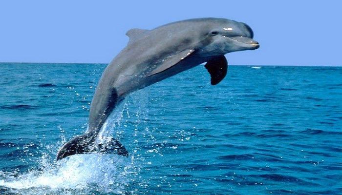 Bakıda çimərliklərdən birində delfinlər peyda oldu?