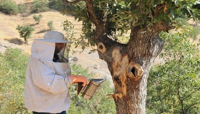 """""""Bal avcıları"""" su kenarından takip ettikleri arılarla doğal bala ulaşıyor"""