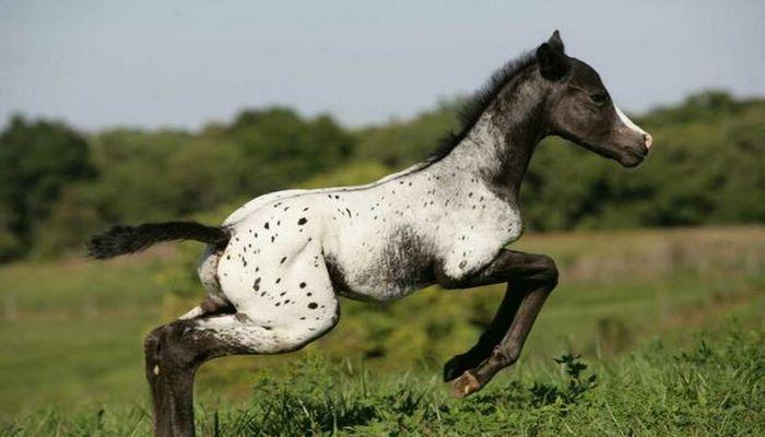 Найден самый маленький конь в мире