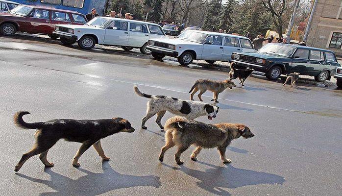 Министерство об убийстве бездомных собак