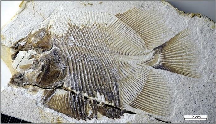 Almaniyada dinozavrları yemiş piranyaların qalıqları tapılıb