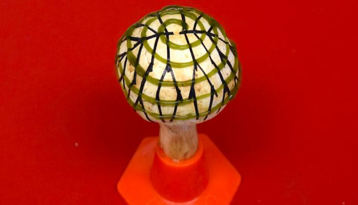 Как получить электричество из грибов?