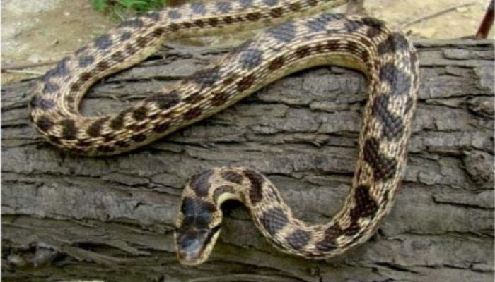 Фермер обнаружил у себя дома 40 ядовитых змей