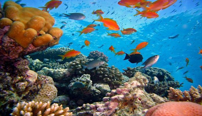 Ученые: Разные температуры влияют на появление новых видов морских обитателей