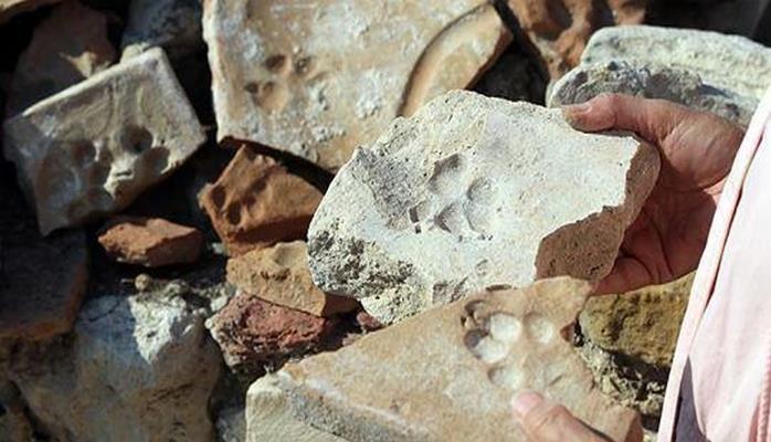 В Турции нашли следы собак и кошек, оставленные 800 лет назад
