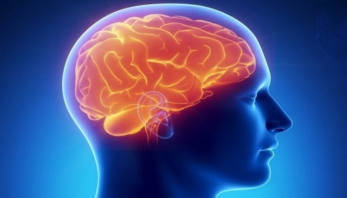 Кора головного мозга появилась на 300 млн лет раньше, чем предполагали ученые