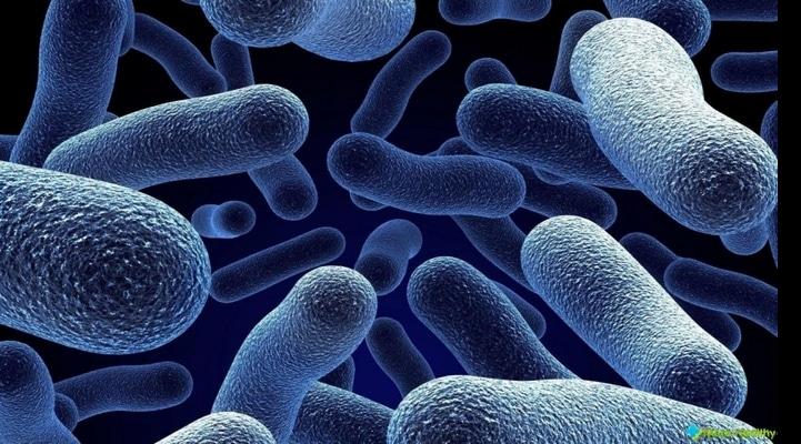 Обнаружены новые виды бактерий, невосприимчивых к антибиотикам