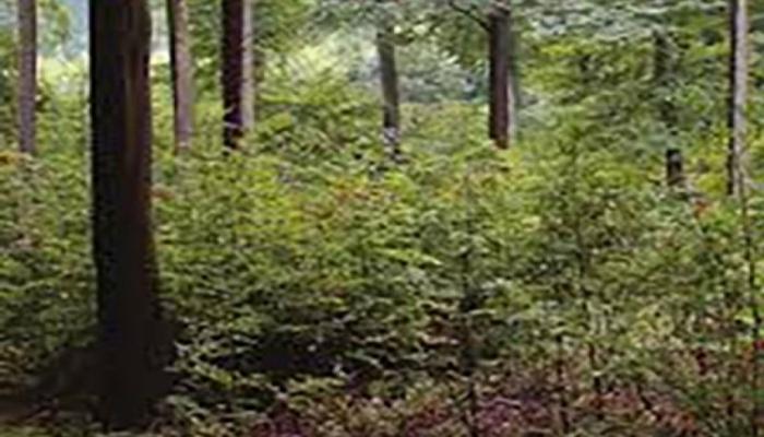 Macarıstanda 180 yaşı olan meşə qırılıb