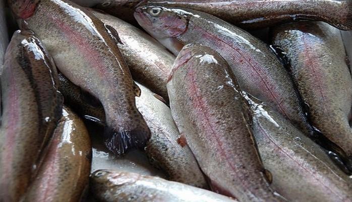 Европейский Союз ввел новые квоты на рыболовство в Балтийском море