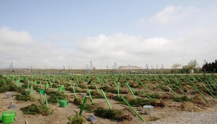 В Хазарском районе прошла акция по высадке деревьев