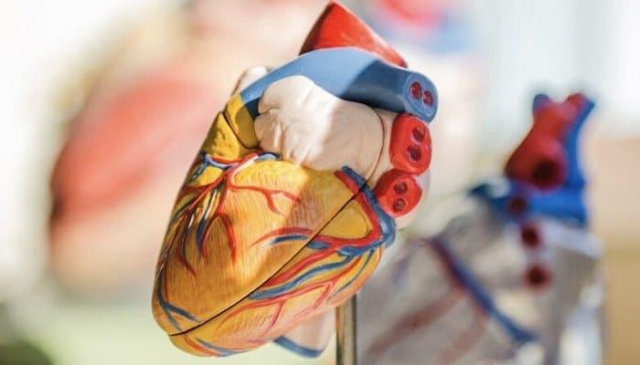 Ученые создали компьютерную модель сердца