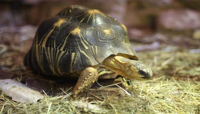 Ученые: Черепахи преодолевают сотни километров благодаря специальным сигналам