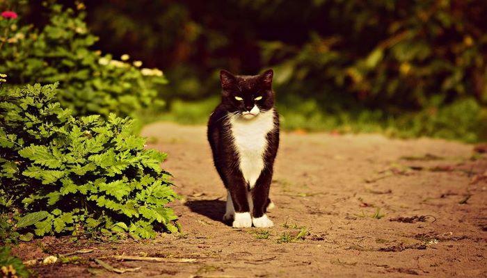 Историки рассказали, почему в Средневековье кошек сжигали на кострах