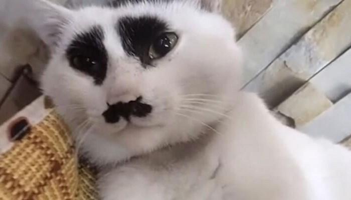 Çin'deki 'üzgün kedi' sosyal medyada ilgi odağı oldu