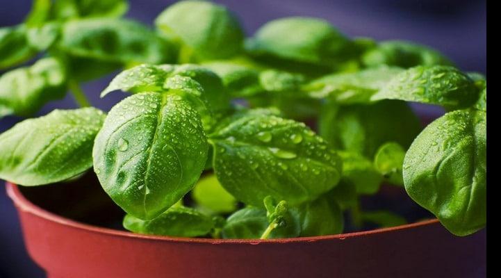 Лучшие травы и специи для поддержки нормального артериального давления