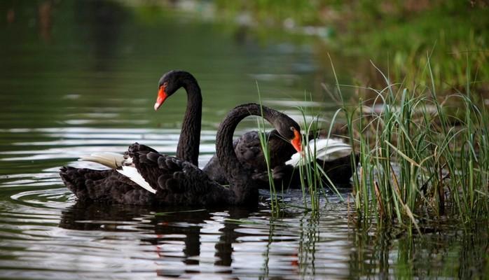 «Птичий рай» в Измире привлекает туристов со всего мира