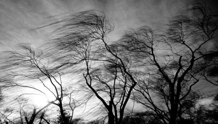 Сильный ветер привел к последствиям в Уджаре