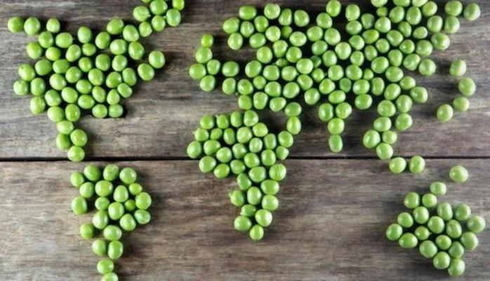 Hər kəs vegetarian olsa, dünya necə olardı?
