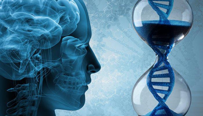 Медики выяснили, почему ожирение ухудшает работу памяти