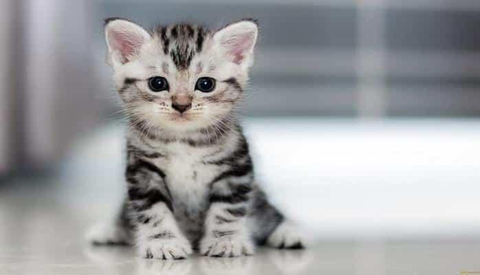В Китае массово торгуют клонированными котами