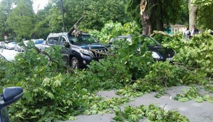 Бакинцев предупредили не парковать автомобили под деревьями