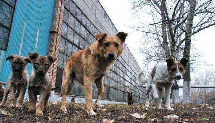 Массовый расстрел собак в Хачмазе