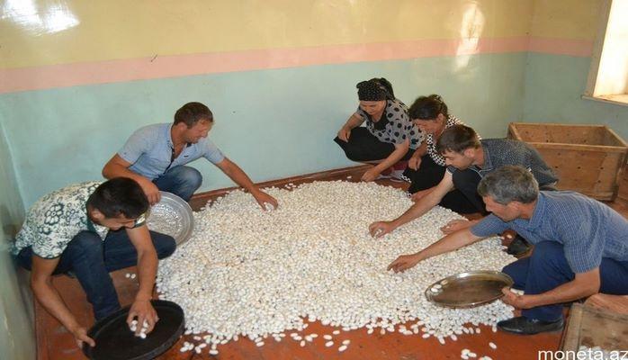 Barama istehsalçılarına 2,5 milyon manat subsidiya ödəniləcək