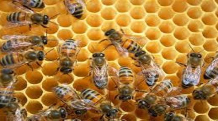 На международной конференции по пчеловодству в Баку участвуют 20 компаний