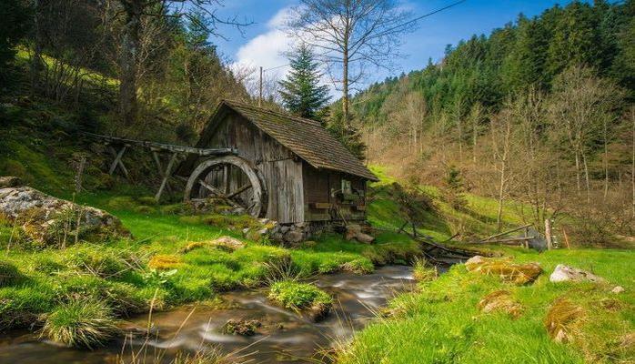 Ученые рассказали о преимуществах посещения леса для здоровья