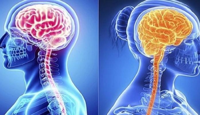 Qadın beyni kişi beynindən aktivdir?
