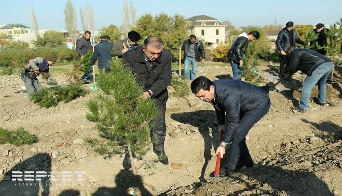 В связи с Днем государственного флага в Гяндже проведена акция по посадке деревьев