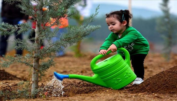 В Турции установлен мировой рекорд по числу высаженных деревьев