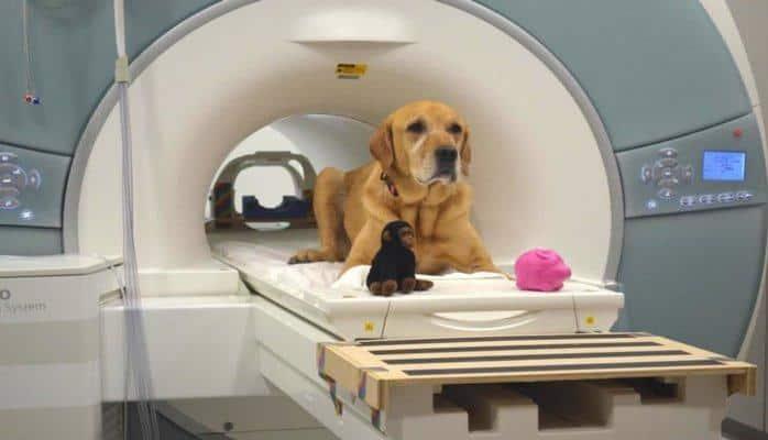 Ученые доказали, что собаки способны запоминать слова