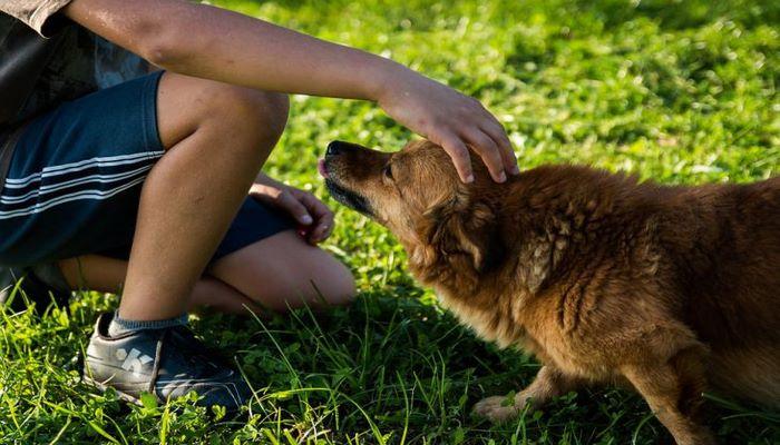 Ученые при помощи ДНК установили связь между древними людьми и собаками