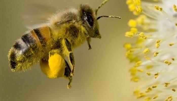 Arıçılara saxladıqları hər arı ailəsinə görə 10 manat veriləcək
