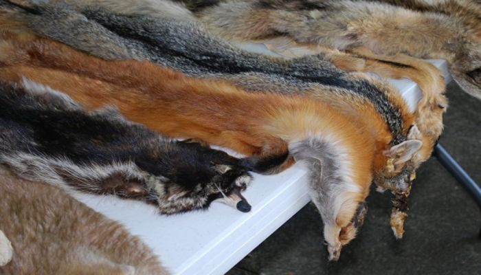 Правительство Норвегии изложило планы запрета на зверохозяйства по производству меха к 2025 году