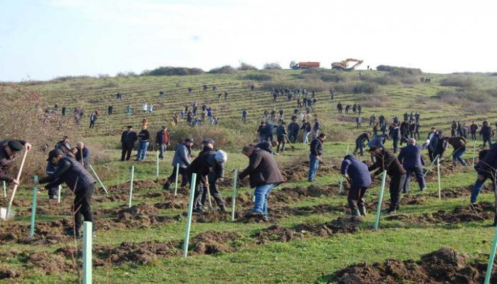 В весенне-осенний сезон было посажено свыше 1 млн. деревьев